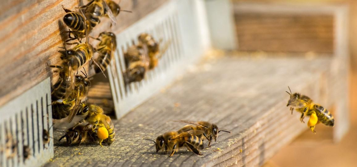ruche-democratie-abeille-nexus-75
