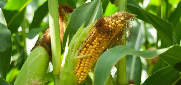 OGM-europe-favorable-NEXUS